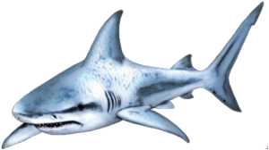 Shark PNG Transparent PNG Clip art