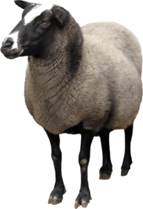 Sheep PNG Background PNG Clip art