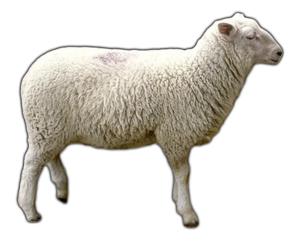 Sheep PNG Clipart Background PNG Clip art