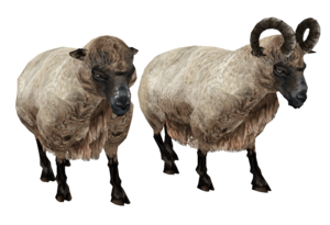 Sheep PNG HD Quality PNG Clip art