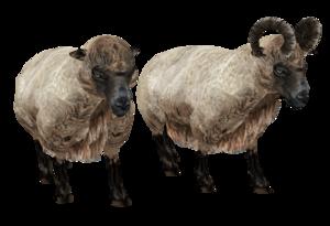 Sheep PNG HD Quality PNG Clip art