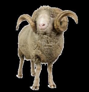 Sheep PNG Image Free Download PNG Clip art