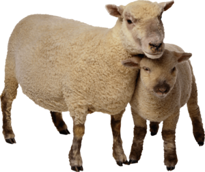 Sheep PNG Photo Image PNG Clip art