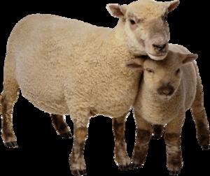 Sheep PNG Photo Image PNG Clip art