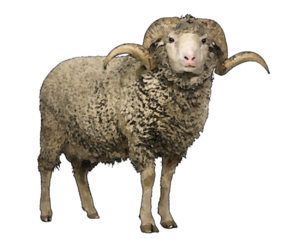 Sheep PNG Pic Background PNG Clip art