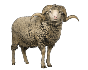 Sheep PNG Transparent Background PNG Clip art