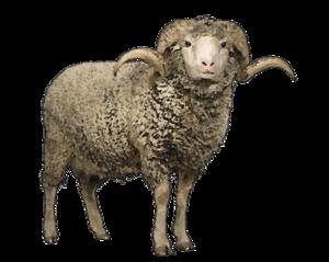 Sheep PNG Transparent Background PNG Clip art