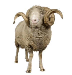 Sheep PNG Transparent File PNG Clip art