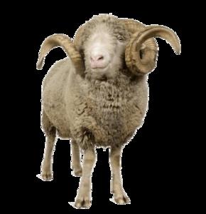 Sheep PNG Transparent File PNG Clip art