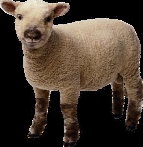 Sheep PNG Transparent Photo PNG Clip art