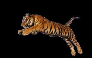 Siberian Tiger PNG Photos PNG Clip art