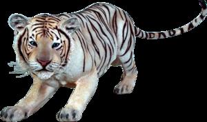Siberian Tiger Transparent PNG PNG Clip art