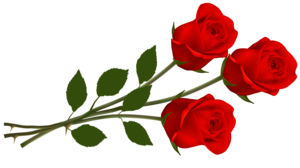 Single Red Rose PNG Transparent Image PNG Clip art