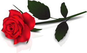 Single Red Rose Transparent PNG PNG Clip art