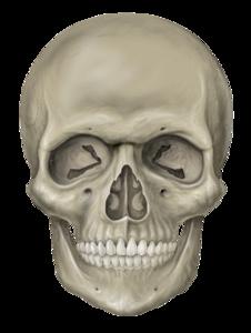 Skull PNG Clipart PNG Clip art