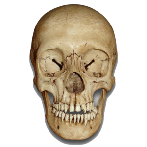 Skull PNG Image PNG Clip art