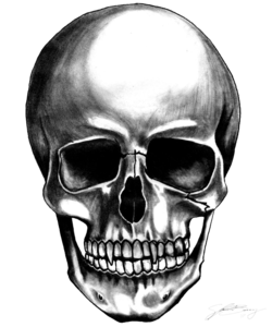 Skull Transparent Background PNG Clip art