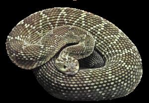 Snake Background PNG PNG Clip art