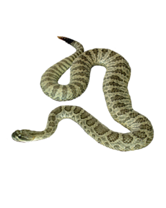 Snake PNG Background Image PNG clipart