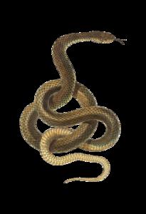 Snake PNG Transparent PNG Clip art