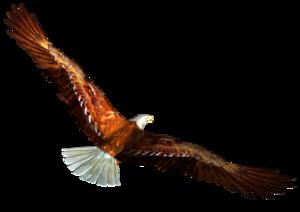 Soaring Eagle PNG Clipart PNG Clip art