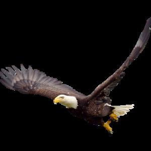 Soaring Eagle PNG File PNG Clip art