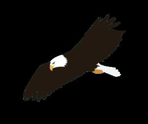 Soaring Eagle PNG Image PNG Clip art