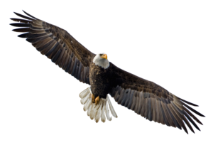 Soaring Eagle Transparent PNG PNG Clip art