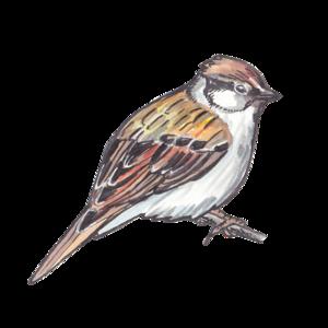 Sparrow PNG Clipart PNG Clip art