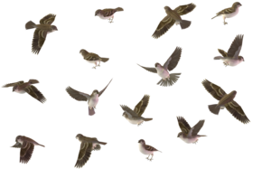Sparrow PNG Image PNG Clip art