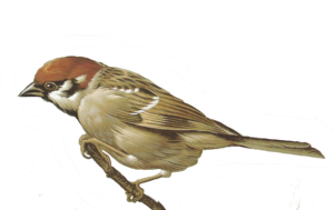 Sparrow PNG Photo PNG Clip art