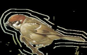 Sparrow PNG Photo PNG Clip art