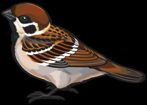 Sparrow PNG Photos PNG Clip art