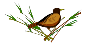 Sparrow PNG Pic PNG image