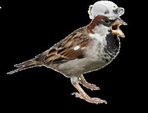 Sparrow PNG Transparent Picture PNG Clip art