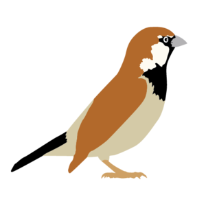 Sparrow Transparent PNG PNG Clip art