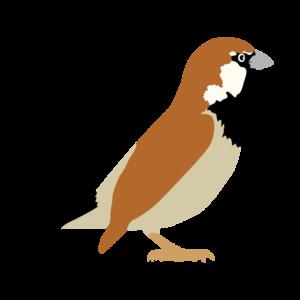 Sparrow Transparent PNG PNG Clip art