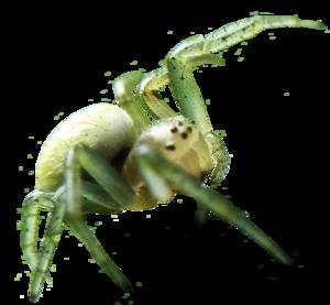 Spider PNG Image PNG Clip art