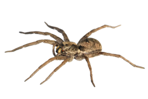 Spider PNG Pic PNG Clip art