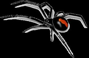 Spider PNG Clip art