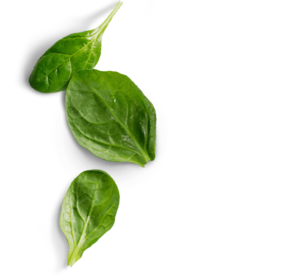 Spinach PNG Photos PNG Clip art