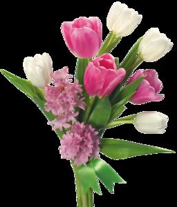 Spring Flower PNG File PNG Clip art