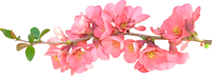 Spring Flower PNG Photo PNG Clip art