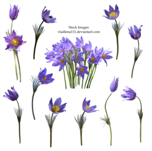 Spring Flower Transparent Background PNG Clip art