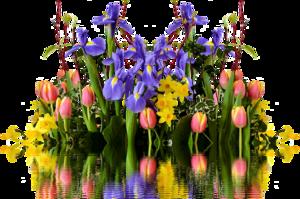 Spring Flower Transparent PNG PNG Clip art