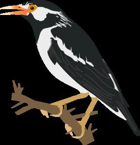 Starling PNG Clipart PNG Clip art