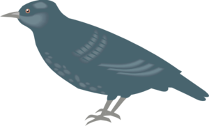 Starling PNG Photos PNG Clip art