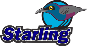Starling PNG Picture PNG Clip art