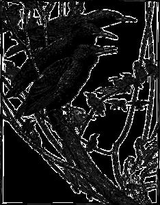 Starling Transparent PNG PNG Clip art