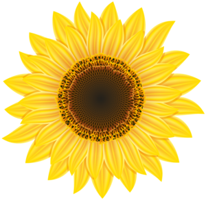 Sunflower PNG Image PNG Clip art